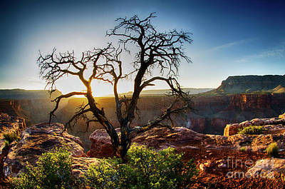 Photograph - Tree At Toroweap Grand Canyon by Bob Christopher