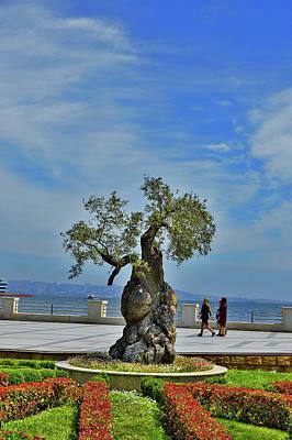 Ethereal - Tree-Banzai. Baku Boulevard. by Andy i Za