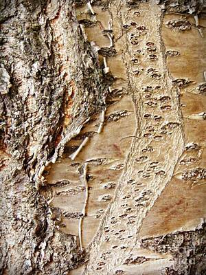 Photograph - Tree Bark 9 by Sarah Loft