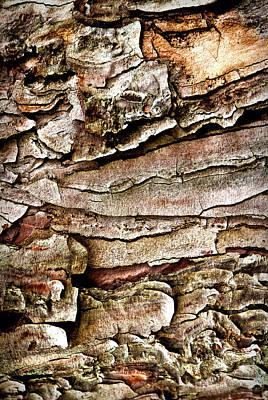 Photograph - Tree Bark Abstract by  Onyonet  Photo Studios