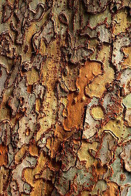 Photograph - Tree Bark Abstract by Sheila Brown