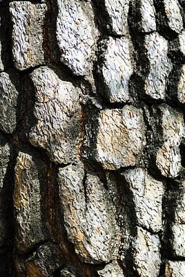 Shinjuku Photograph - Tree Bark by Bill Brennan - Printscapes