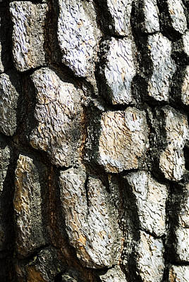 Photograph - Tree Bark by Bill Brennan - Printscapes