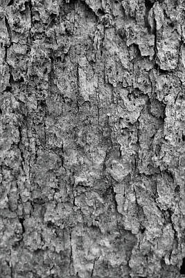 Photograph - Tree Bark Black And White by Dan Sproul