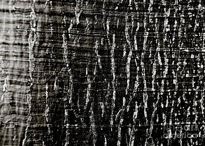 Tree Bark Art Print by Charmian Vistaunet