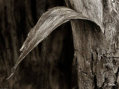 Photograph - Tree Bark by Joe Bonita