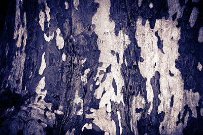 Photograph - Tree Bark by John Magyar Photography