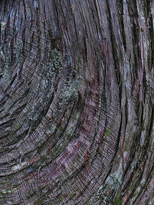 Photograph - Tree Bark by Juergen Roth