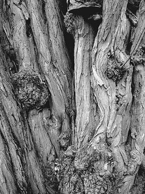 Photograph - Tree Bark by Kenneth Carpenter