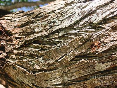 Photograph - Tree Bark by Laura Forde