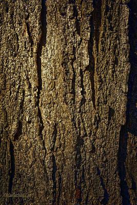 Time Photograph - Tree Bark by LeeAnn McLaneGoetz McLaneGoetzStudioLLCcom