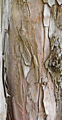 Tree Bark Original by Sarah Loft