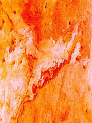 Photograph - Tree Bark Series #40 Salmon Gum by Lexa Harpell