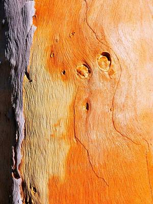 Photograph - Tree Bark Series #41 Salmon Gum by Lexa Harpell