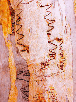 Photograph - Tree Bark Series #45 Scribbly Gum by Lexa Harpell