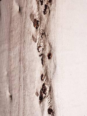 Photograph - Tree Bark Series #47 Ghost Gum by Lexa Harpell