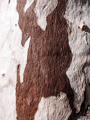 Photograph - Tree Bark Series #48 Ghost Gum by Lexa Harpell