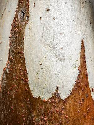 Photograph - Tree Bark Series #49 Ghost Gum by Lexa Harpell