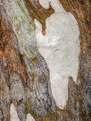 Photograph - Tree Bark Series #50 Ghost Gum by Lexa Harpell