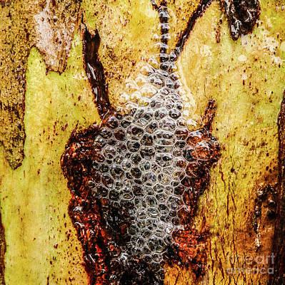Photograph - Tree Bark Series - Bubbles #1 by Lexa Harpell