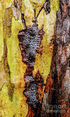 Photograph - Tree Bark Series  - Bubbles #2 by Lexa Harpell