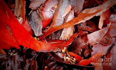 Photograph - Tree Bark Series  - Colours #5 by Lexa Harpell