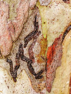 Photograph - Tree Bark Series  - Colours #6 by Lexa Harpell