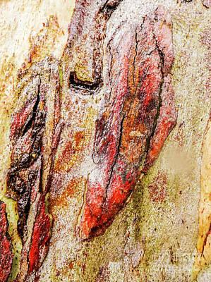 Photograph - Tree Bark Series  - Colours #7 by Lexa Harpell