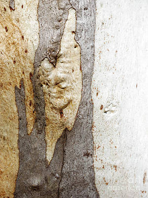 Photograph - Tree Bark Series - Ghost Gum #1 by Lexa Harpell