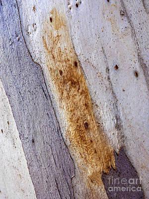 Photograph - Tree Bark Series - Ghost Gum #2 by Lexa Harpell