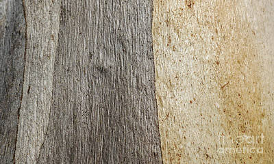 Photograph - Tree Bark Series - Ghost Gum #3 by Lexa Harpell