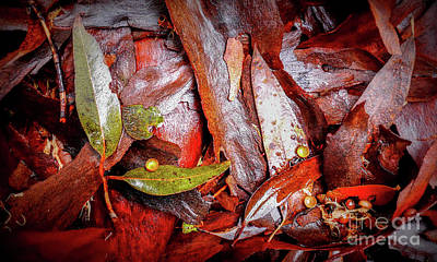 Photograph - Tree Bark Series  - Patterns #1 by Lexa Harpell