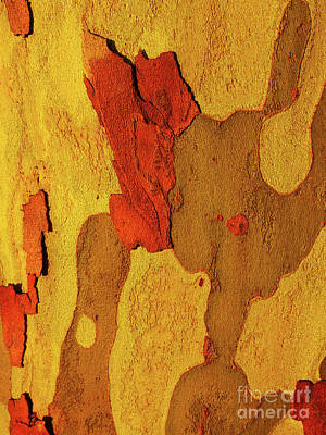 Photograph - Tree Bark Series - Peeling #10 by Lexa Harpell