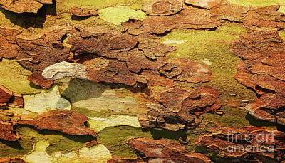 Photograph - Tree Bark Series - Peeling #11 by Lexa Harpell