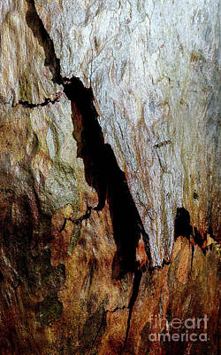Photograph - Tree Bark Series  - Peeling #4 by Lexa Harpell