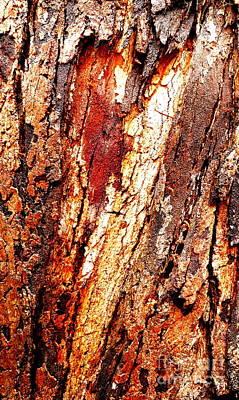 Photograph - Tree Bark Series  - Peeling #5 by Lexa Harpell