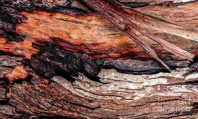 Photograph - Tree Bark Series  - Peeling #6 by Lexa Harpell