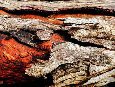 Photograph - Tree Bark Series  - Peeling #7 by Lexa Harpell