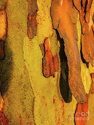 Photograph - Tree Bark Series - Peeling #9 by Lexa Harpell