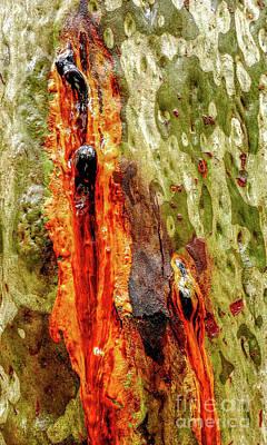Photograph - Tree Bark Series  - Sap #6 by Lexa Harpell
