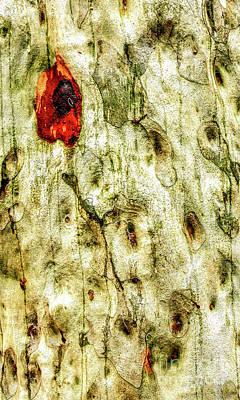 Photograph - Tree Bark Series  - Sap #7 by Lexa Harpell