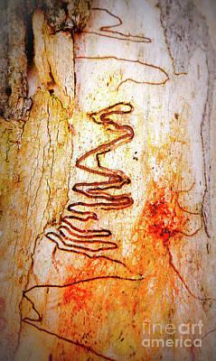 Photograph - Tree Bark Series - Scribble Gum #1 by Lexa Harpell