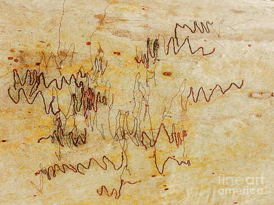 Photograph - Tree Bark Series - Scribbly Gum #2 by Lexa Harpell