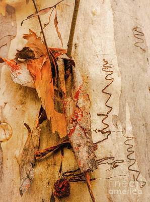 Photograph - Tree Bark Series - Scribbly Gum #3 by Lexa Harpell