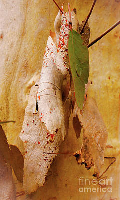 Photograph - Tree Bark Series - Scribbly Gum #4 by Lexa Harpell