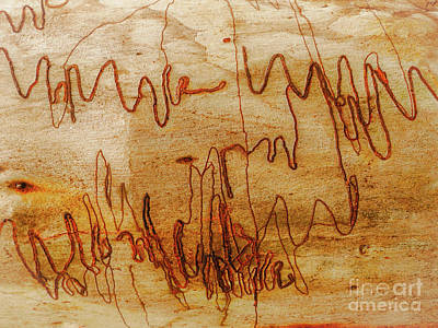 Photograph - Tree Bark Series - Scribbly Gum #5 by Lexa Harpell