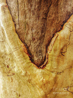 Photograph - Tree Bark Series - Scribbly Gum #6 by Lexa Harpell