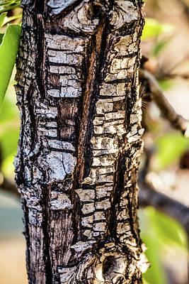 Elpaso Photograph - Tree Bark by Subhadra Burugula