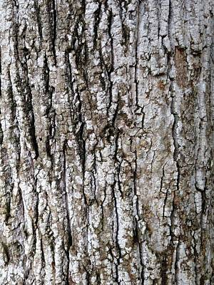 Photograph - Tree Bark by T Fry-Green