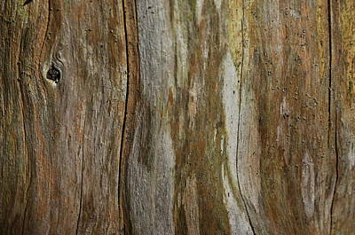 Photograph - Tree Bark Textures And Hues by Andrea Kollo